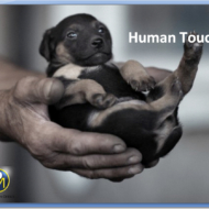 human touch1
