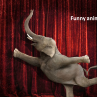 funny-animals