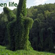 green-life8