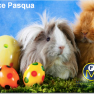 managers_office_italy_easter_7