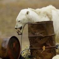 Goodbye, polar bears photo
